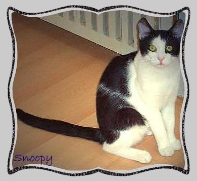 Kater Snoopy